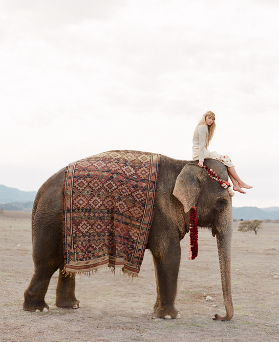 Elephant Editorial – Santa Ynez
